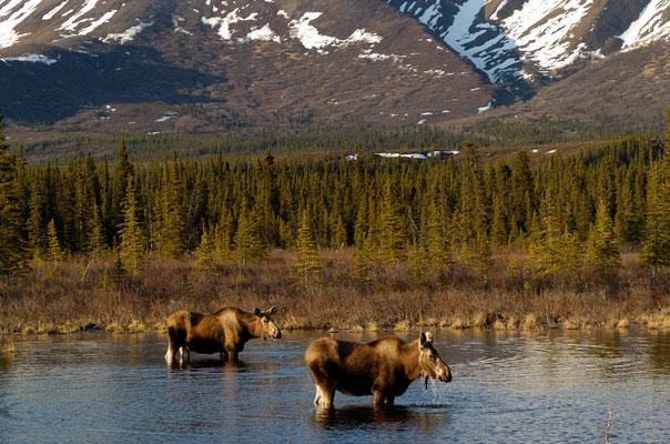 Elche, Alaska Range