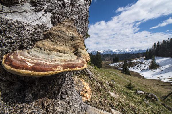 Baumpilz im Lochbachtal