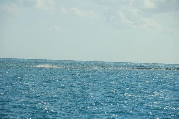 Die inneren Riffe sind bei Ebbe schlecht und bei Flut nicht sichtbar