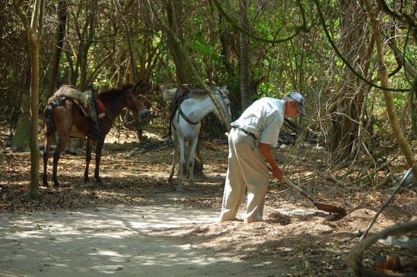 Kompost wird in Säcke gefüllt und per Esel abtransportiert