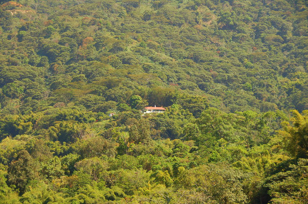 Victoria Koffeefarm, mitten im Busch