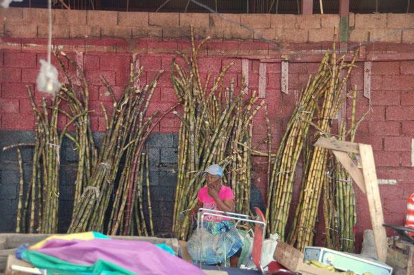 Sugarcane bzw. Zuckerrohr