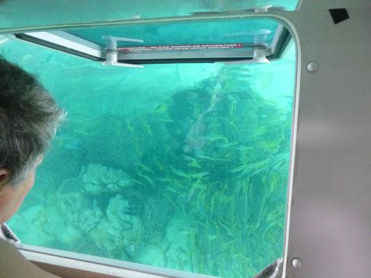 Unter dem Boot ein wahres Aquarium
