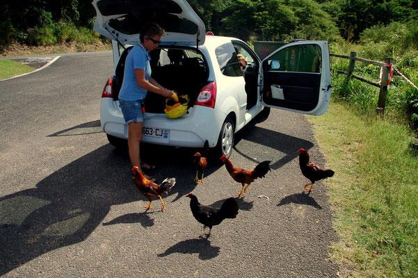 Die Hühner sind neugierig....die kennen unsere Rezepte und Kochbücher noch nicht