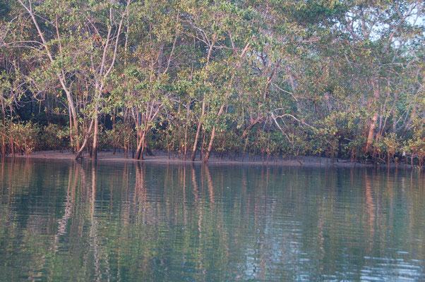 Morgens um 07:00 auf dem River Cacice, Isla del Rey