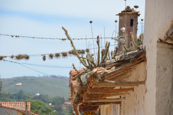 Stillleben auf einem Dach