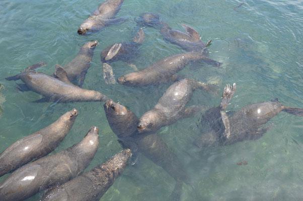 Bei den Fischern sind auch die Seelöwen zu hause