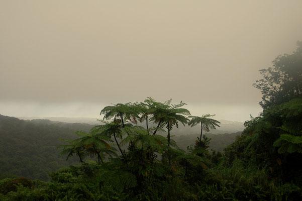 Es regnet viel im Regenwald