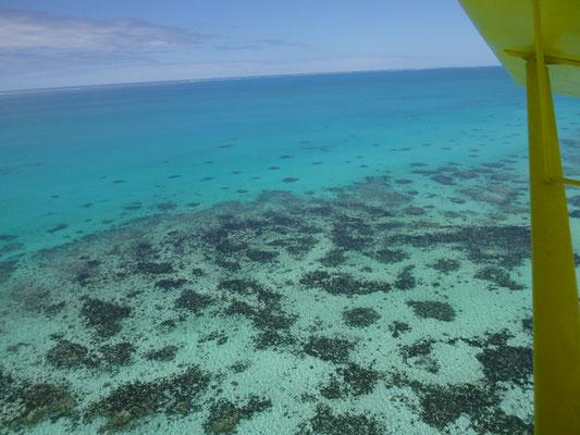 Korallengärten von oben