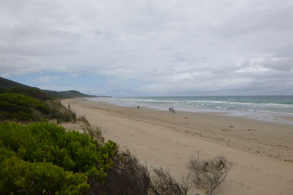 WILD COAST AROUND LORNE