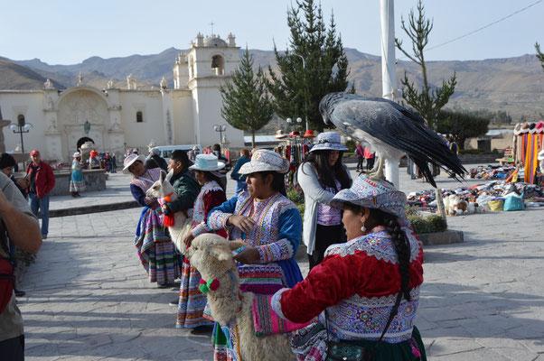 TIERSCHAU für TOURISTAS    1 Foto für 1 SOL