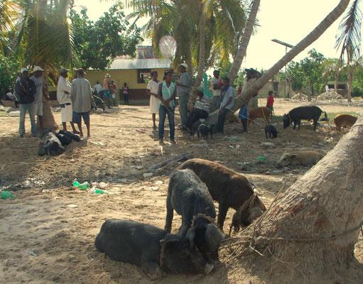 Schweinemarkt