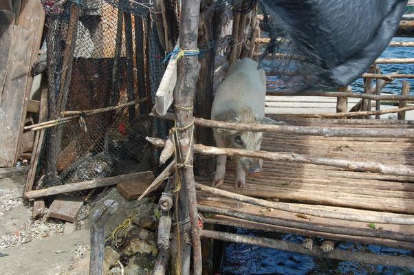 Schweinehaltung praktisch über Wasser