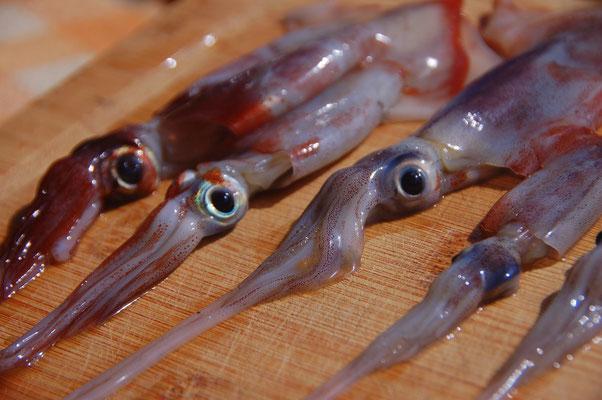Über Nacht an Deck gesprungen: Squid....