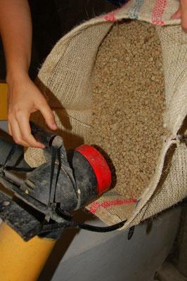 Mit einem Schlauch werden die getrockneten Bohnen in Säcke geblasen