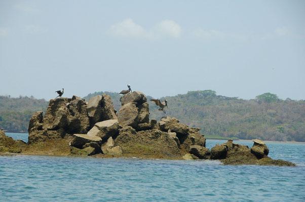 Gefährlich: Bei Hochwasser ( +3,80m )  ist von den Rocks nichts zu sehen.