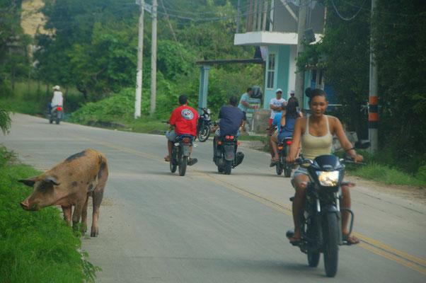 Alltag auf der Inselstrasse