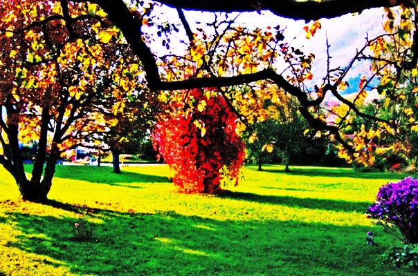 Atelier-Garten von Pedro Meier Multimedia Artist Niederbipp um 2008 – Gerhard Meier-Weg –  rechts: Phlox – in der Mitte: alter Kirschbaum überwachsen mit Efeu im herbstlichen Rot – links: Kastanienbaum – Foto © Pedro Meier – Olten – Bangkok – Thailand