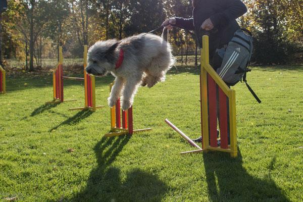 Campino hüpf