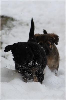... und pflügen durch den Schnee
