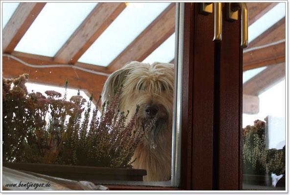 Ida kann es kaum erwarten und nutzt jede Gelegenheit um einen Blick auf die Welpis zu erhaschen