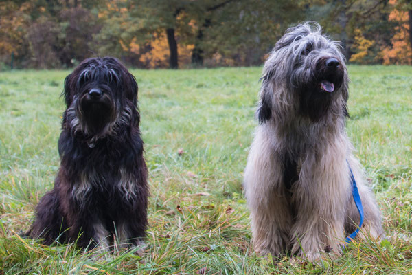Lili (Delaila) und Duke (Dumbledore)