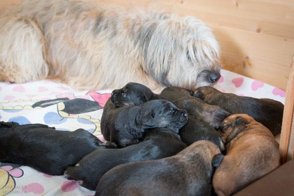 Oma Benni darf endlich zu den Babys