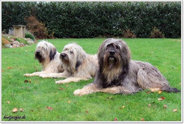 drei Catalanen