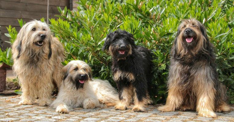 Happy family: Benni, Otti, Lili und Tango