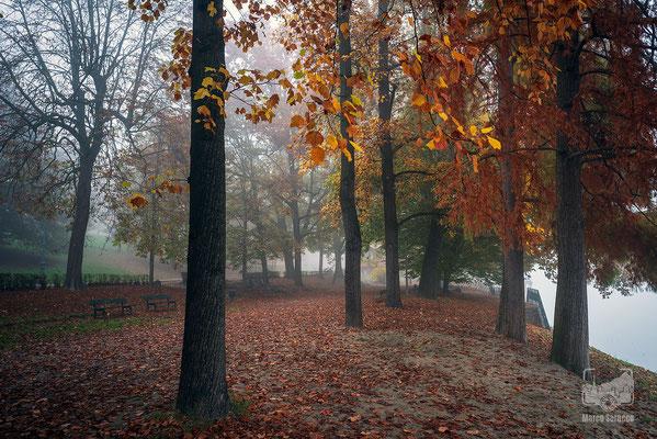 17 - Una mattina d'autunno al Valentino