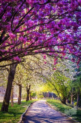 22- Primavera sul lungo Po