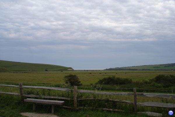 Vaches et moutons dans le Seven Sisters Country Park (© lebateaublog 2012)