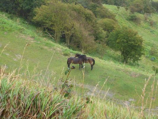 On ze White Cliffs of Dover (©lebateaublog2011-Mu.L)