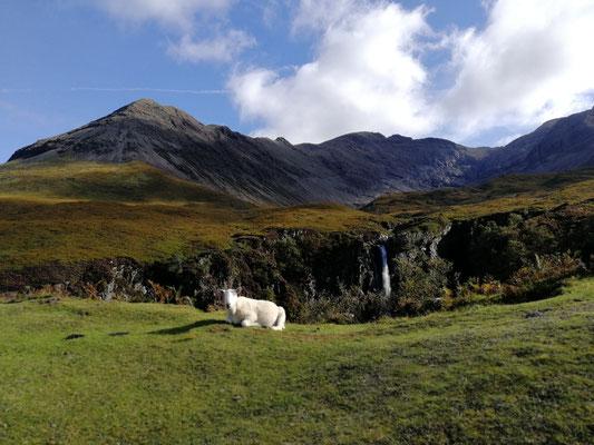 Wasserfall mit niedlichem Schaf