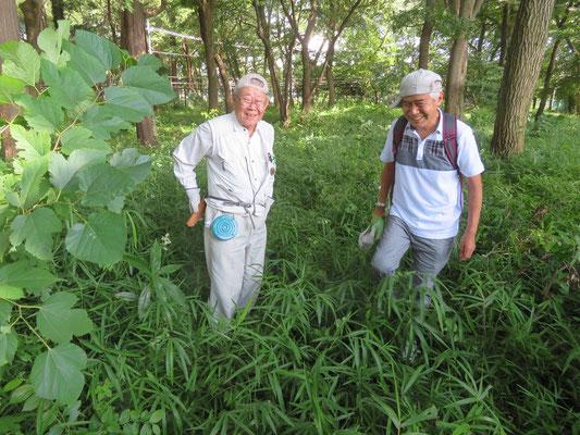 済美山自然林 クズもはびこっています