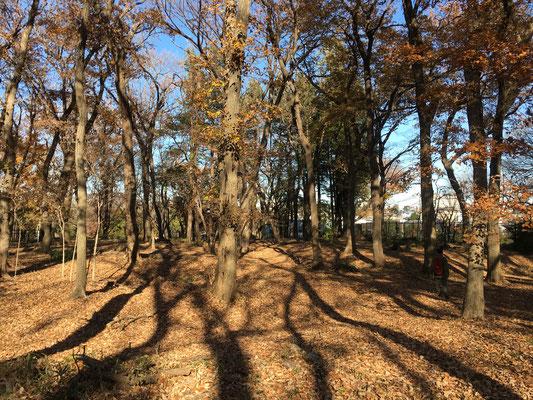 済美山自然林は小春日和でした