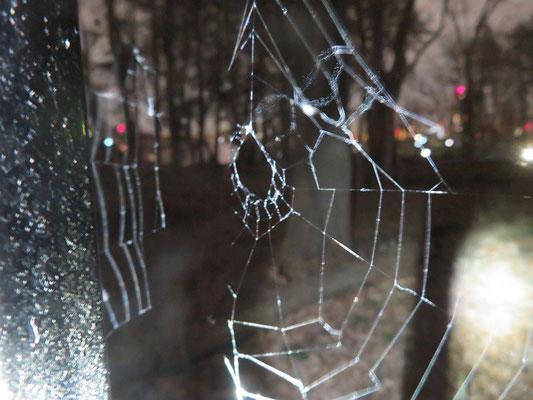垂直円網(クモの巣)
