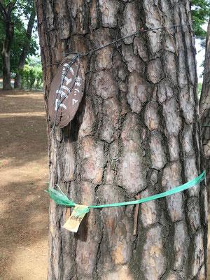 運動公園の樹木に銘板を付けています(古くなり取れてしまいそう)