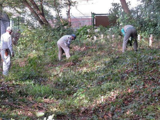 善福寺川沿いヒガンバナのエリア整理作業