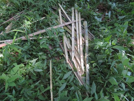 センターから支給された竹をナタで分割して杭を作りました(打ち込むため先端を尖らせています)