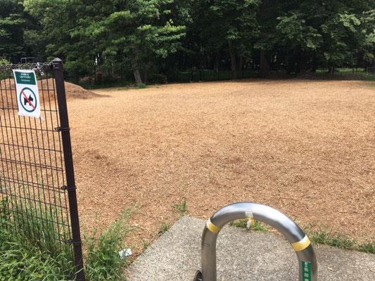 済美山自然林東側林地の草地が突然ウッドチップの広場に変貌(草地には昆虫が沢山いました)