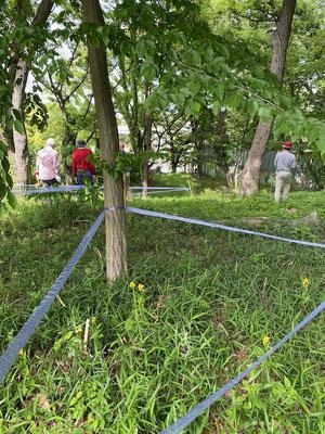 保護柵(しっかりした竹とテープで良く目立ちます)