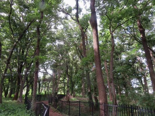 梅雨明けの済美山自然林