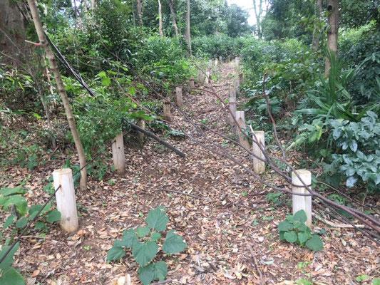 観察通路には大小の落枝が多数ありました。