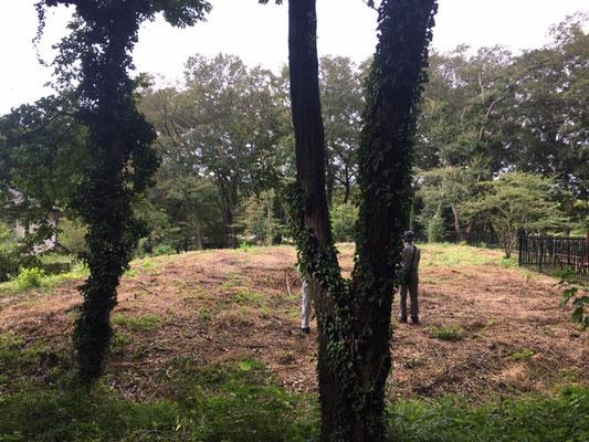 済美山自然林 皆伐エリア遠景