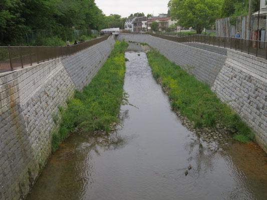 善福寺川に掛かる済美橋から上流を望む