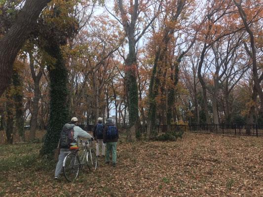 済美山自然林 落ち葉の絨毯(落枝・倒木が整理されていた)
