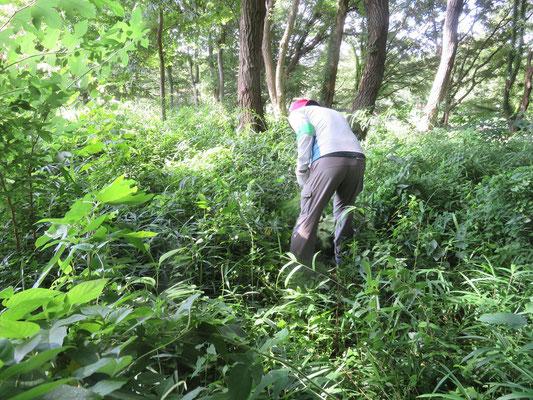 済美山自然林 草深い