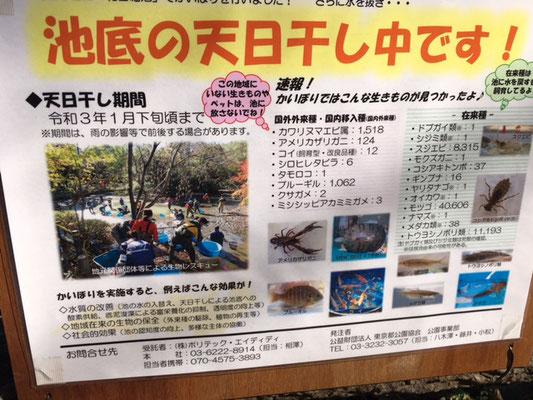 和田堀池「かいぼり」説明用のパネル