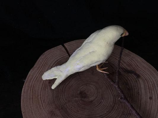 カナリア 紙粘土で作りました